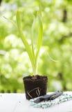 Strumenti di giardinaggio e del giacinto Fotografie Stock