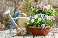 Strumenti di giardinaggio e fiori variopinti della pansé fotografia stock