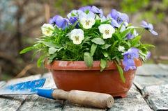 Strumenti di giardinaggio e fiori variopinti della pansé fotografie stock libere da diritti