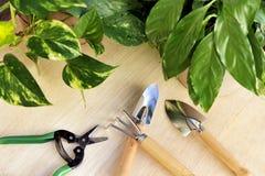 Strumenti di giardinaggio e houseplants Immagini Stock Libere da Diritti