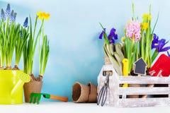 Strumenti di giardinaggio e piantina dei fiori della molla per la piantatura sull'aiola nel giardino Concetto di orticoltura immagini stock