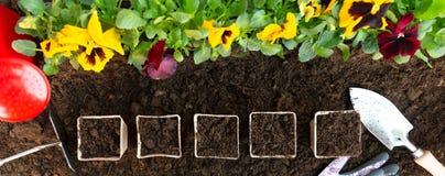 Strumenti di giardinaggio e vasi di carta sul fondo del suolo Piantatura del fiore della pans? della molla in giardino Concetto d fotografia stock