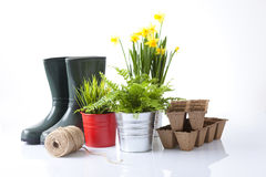 Strumenti di giardinaggio nuovi, cassetto della canna Fotografia Stock Libera da Diritti