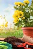 Strumenti di giardinaggio per il ver blu del fondo delle piante e dei fiori degli alberi Fotografie Stock Libere da Diritti