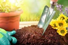Strumenti di giardinaggio per le piante e fiori ed outs verdi del fondo Fotografie Stock