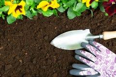 Strumenti di giardinaggio sul fondo del suolo Piantatura del fiore della pans? della molla in giardino Concetto del lavoro del gi fotografia stock libera da diritti