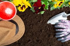 Strumenti di giardinaggio sul fondo del suolo Piantatura del fiore della pans? della molla in giardino Concetto del lavoro del gi immagine stock libera da diritti