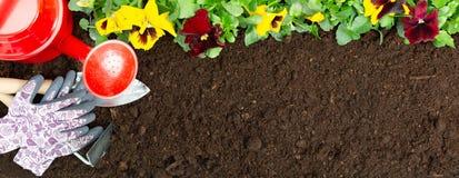 Strumenti di giardinaggio sul fondo del suolo Piantatura del fiore della pans? della molla in giardino Concetto del lavoro del gi fotografia stock