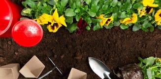 Strumenti di giardinaggio sul fondo del suolo Piantatura del fiore della pans? della molla in giardino Concetto del lavoro del gi fotografie stock