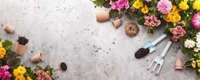 Strumenti di giardinaggio sul fondo dello scisto fotografia stock libera da diritti