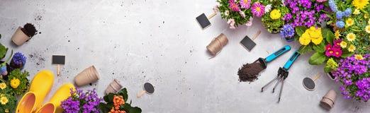 Strumenti di giardinaggio sul fondo dello scisto fotografia stock