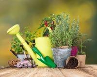 Strumenti di giardino con le piante fresche fotografia stock libera da diritti