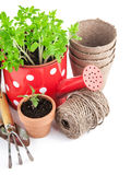 Strumenti di giardino con le piantine di verdure Fotografia Stock Libera da Diritti