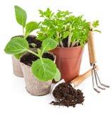 Strumenti di giardino con le piantine di verdure Fotografie Stock Libere da Diritti