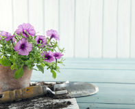 Strumenti di giardino d'annata fotografia stock