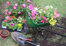 Strumenti di giardino e fiori della sorgente Fotografia Stock