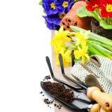 Strumenti di giardino e fiori variopinti Immagine Stock