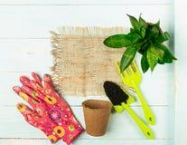 Strumenti di giardino, vasi, guanti delle piante verdi su un fondo blu Il concetto della molla Copi lo spazio fotografia stock libera da diritti