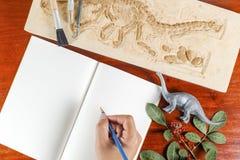 Strumenti di scheletro e archeologici Preparandosi per la storia o di reccord Fotografie Stock Libere da Diritti