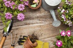 Strumenti e fiore di giardinaggio fotografia stock libera da diritti