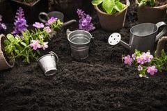 Strumenti e fiori di giardinaggio fotografia stock