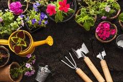 Strumenti e fiori di giardinaggio immagine stock libera da diritti