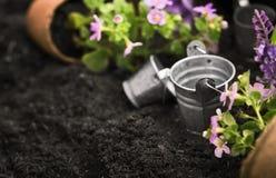 Strumenti e fiori di giardinaggio fotografia stock libera da diritti