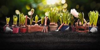 Strumenti e piante di giardinaggio Il giardino della primavera funziona il concetto immagine stock