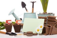 Strumenti e piantine di giardinaggio Immagine Stock