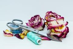 Strumenti per il cucito e le rose secche Fotografia Stock