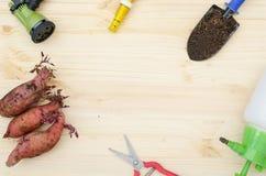 Strumenti per l'agricoltura della patata dolce Fotografia Stock