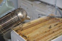 Strumento degli apicoltori del fumatore utilizzato per tenere le api a partire dall'alveare Fotografia Stock Libera da Diritti