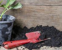 Strumento della pianta con suolo e blackground di legno Fotografia Stock Libera da Diritti