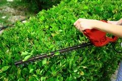 Strumento della potatura sull'arbusto verde Fotografie Stock Libere da Diritti