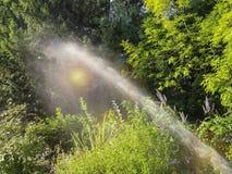Strumień od podlewanie przyrządu iryguje zielone rośliny obrazy royalty free
