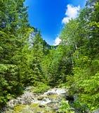 strumień przez cały doliny Obraz Royalty Free
