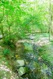 Strumień Przez Luksusowego Zielonego lasu Zdjęcia Royalty Free