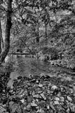 Strumień w drewnach, czarny i biały Obraz Stock