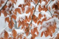 Strumień w jesień lesie Zdjęcie Stock