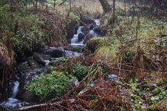 Strumień w jesień lesie obraz stock
