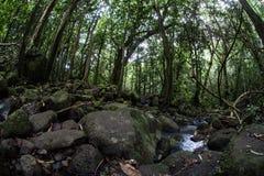 Strumień w Tropikalnym tropikalnym lesie deszczowym Zdjęcie Royalty Free