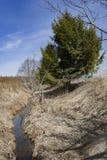 Strumień w wieś krajobrazie Obrazy Royalty Free