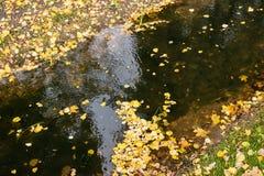 Strumień z spadać żółtymi liśćmi Obrazy Royalty Free