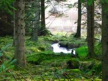 Strumień Runnig Przez Kielder lasu Fotografia Royalty Free