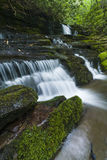 Strumień & siklawy, Greenbrier, Great Smoky Mountains NP Fotografia Stock