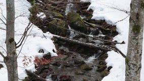 Strumień w halnym zima lesie zbiory wideo