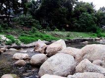 Strumień w tropikalnym lesie deszczowym Obraz Stock