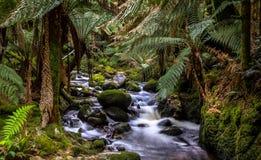 Strumień w tropikalnym lesie deszczowym Ta Zdjęcia Royalty Free