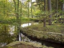 strumieni lasów Zdjęcia Stock