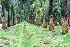 Strumienia bieg przez nafcianej palmy plantaci Obraz Royalty Free